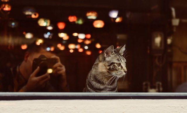 Cat Cafe Osaka, Japan