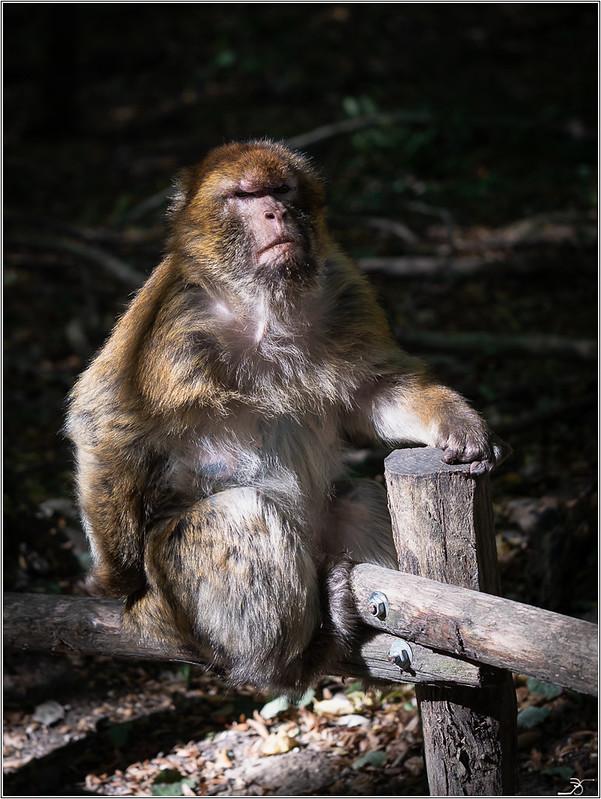 Terre des singes part3 30068268987_e1914a3b6e_c