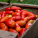 Crate Full of Tomatoes by wuestenigel