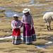 Niñas pastoras del altiplano