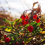 Fruit Bokeh near Beach - Fehmarn - Schleswig-Holstein - Germany