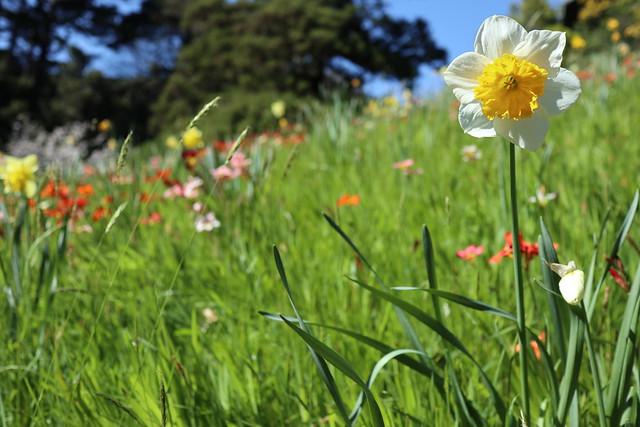 Botanic garden - Wellington New Zealand