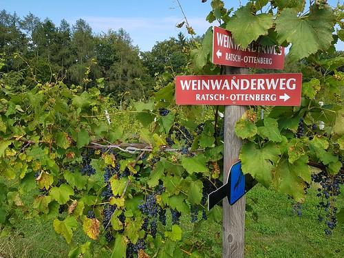 Südsteirische Weinstraße (8-9 Sep 2018)