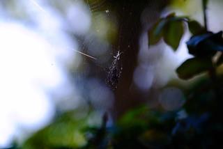 spider study 1