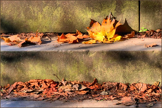 Tyburn Steps, Autumn