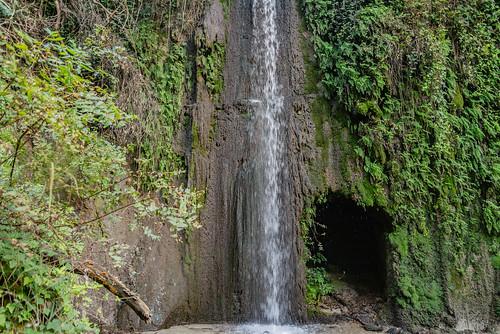 33-Un air d'Amazonie