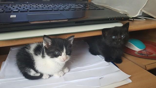 27/09/2018 ... visite chez un vétérinaire .. deux petites soeurs abandonnées de 1 mois :-( Allez.. venez chez nous !! ;-)