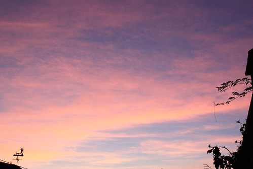 8 - 8102018 - Sweet Pink - Les Joncheries