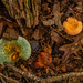 Forest Floor with Green and Orange Fungi_DSC9960-copy-1-A-1
