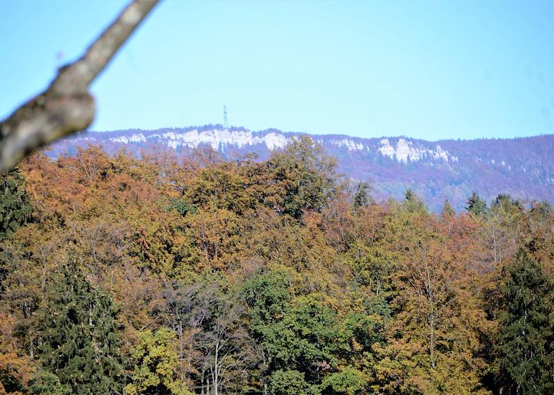 Autumn Trees 14.10 (3)