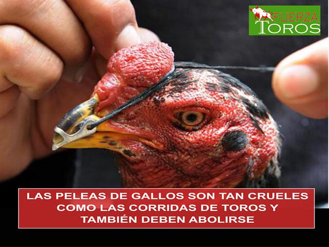 Las peleas de gallos también deben ser abolidas