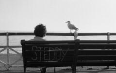 Steddy