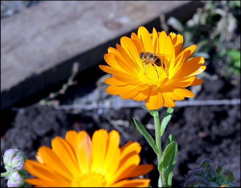 Касарги 3786 Flores