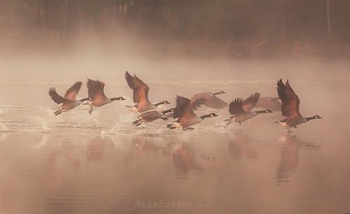 Misty Takeoff