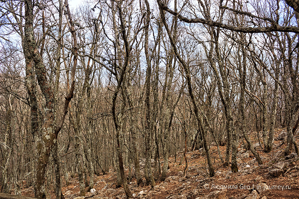 природа в апреле на вершине Ай-Петри