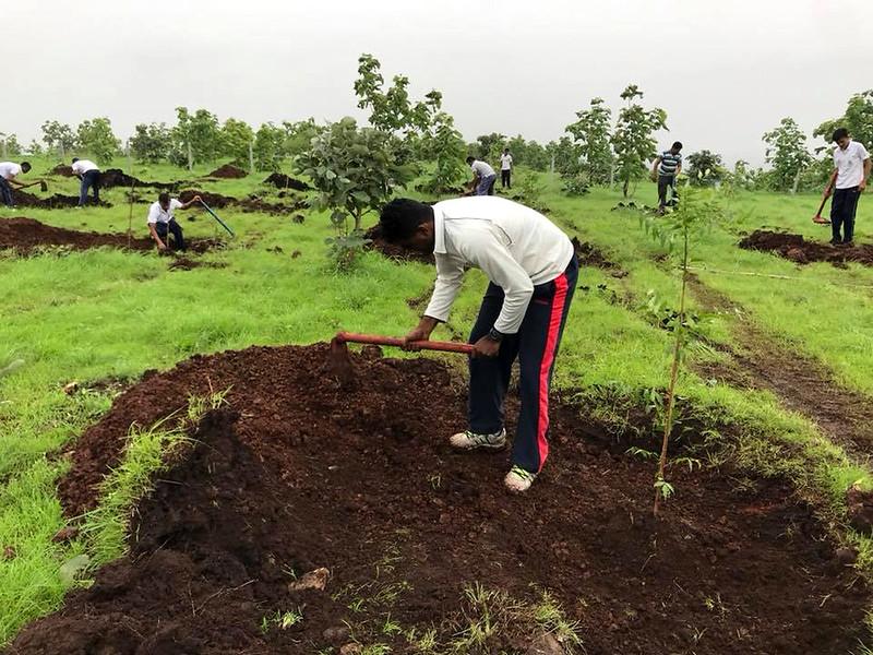 हाथीपावा पहाड़ी पर पौधरोपण