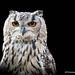 Owlstanding.......