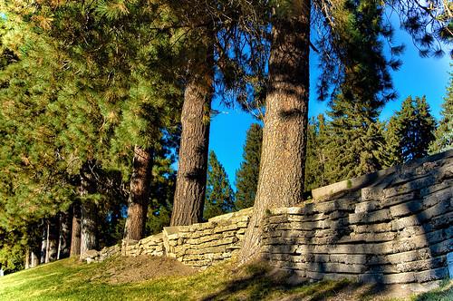 reno nevada trees pine ponderosa cemetary mountainviewcemetary donbachman narodniemstiteli