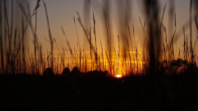 sunset, tall grass, RICOH PENTAX K-3, Sigma 50mm F1.4 EX DG HSM