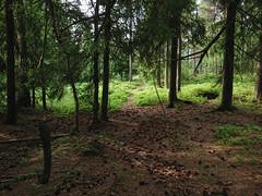 Ytterst for bålet - Trippe stadskogen, Askim, Noorway
