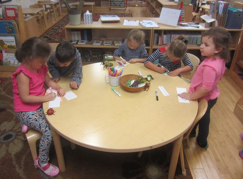 illustrating and writing insect books