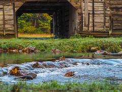 Cataloochee Creek, Great Smoky Mountains National Park, North Carolina