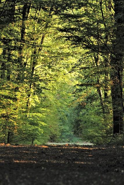 Alley in Retz Forest