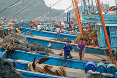 VIETNAM The Harbour of Cat Ba