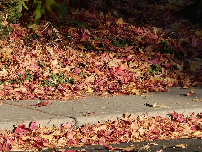 2018-10-30 - Fallen Leaves