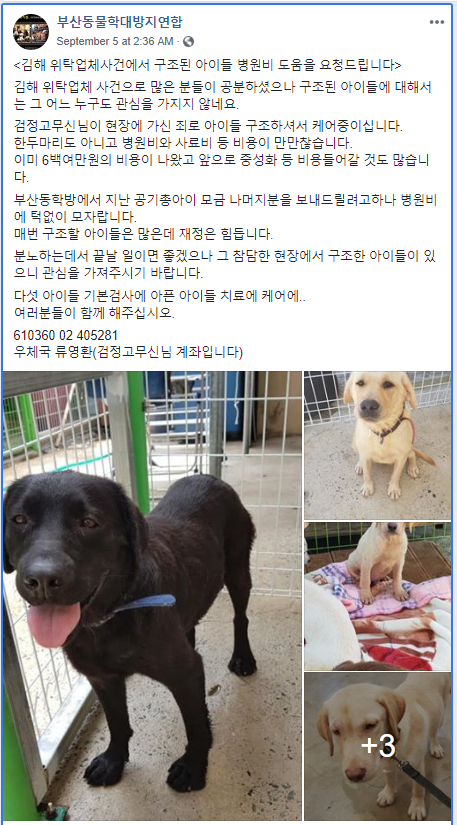 Remains of 20 dogs found at Pet Hotel of Death in Gimhae