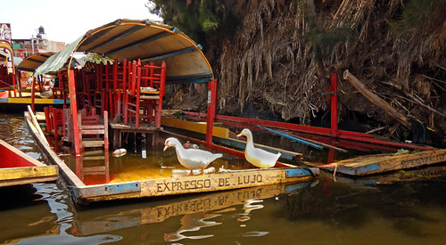 Ducks take over the sunken boat, Luxury Express', at Xochimilco, Mexico City