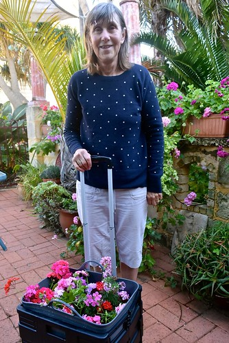 Jill ready with cutting donations for the Geranium Society 27 October 2018