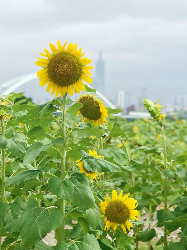 彩虹河濱公園_181006_0049