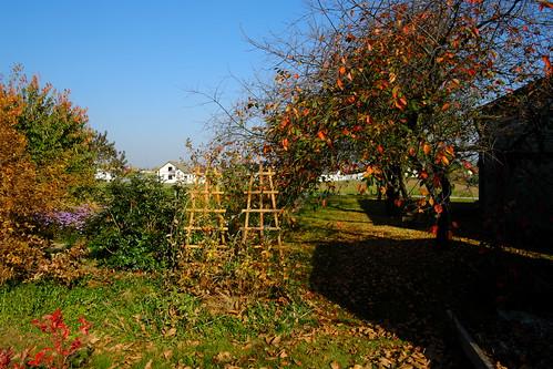 Jesień - Autumn DSCF8590.jpg silky
