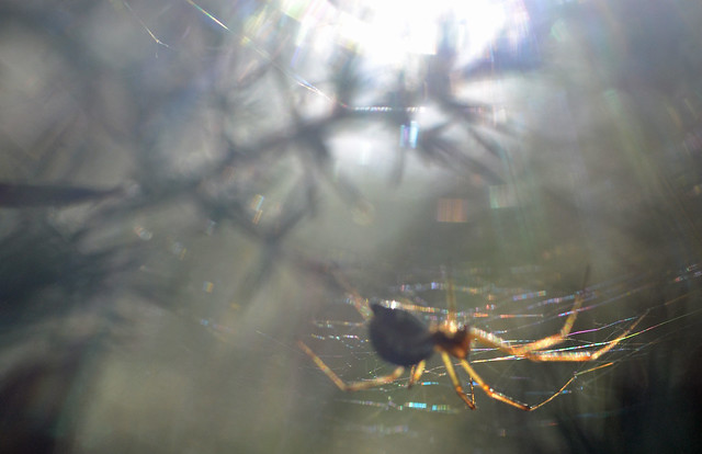 another out of focus spider