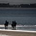 chevaux contre jour