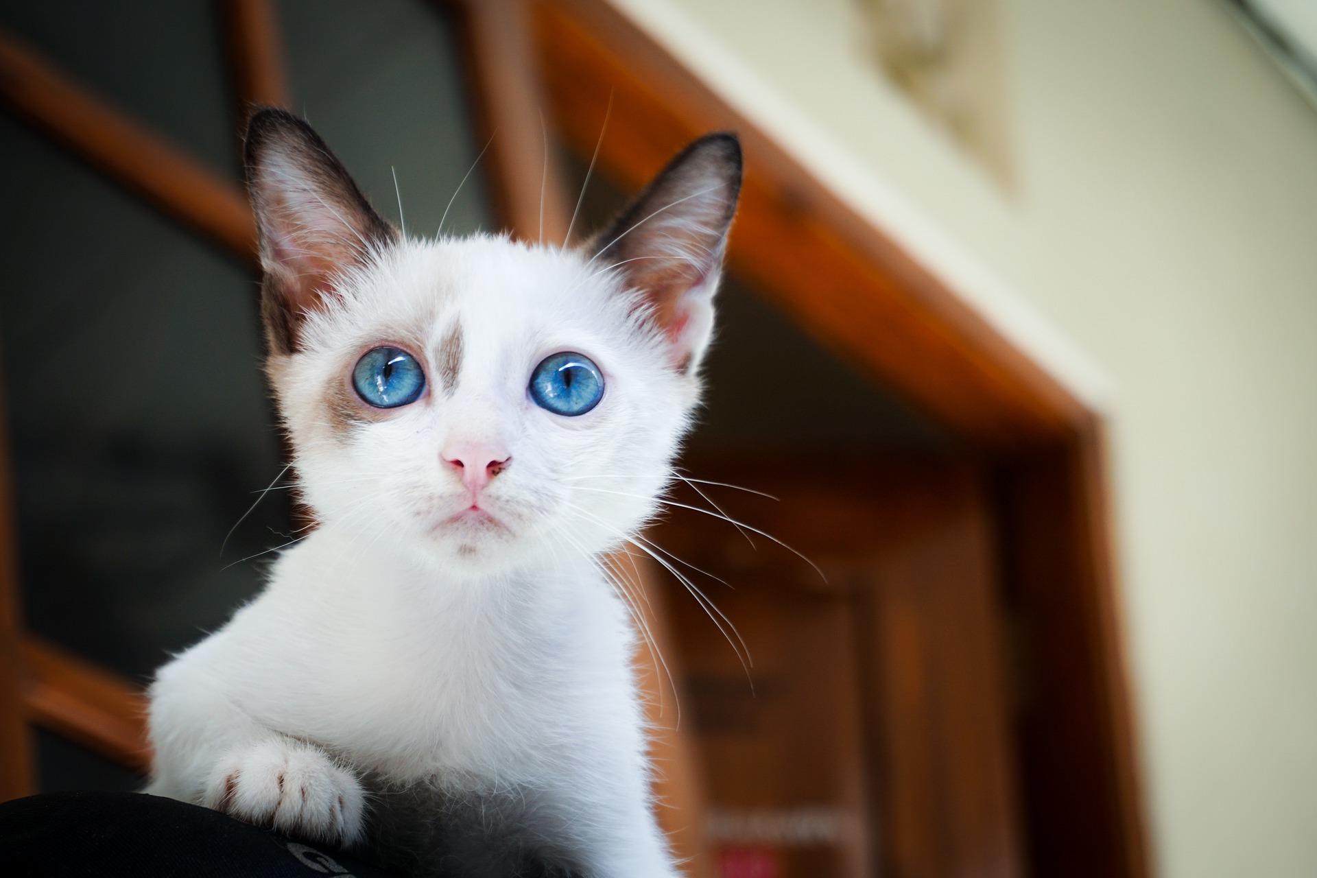 Imágenes De Gatos → TOP Fotos De Gatetes En HD Y Libres