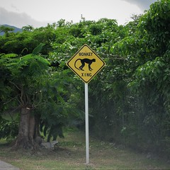 Monkey Xing, warning sign on road to Mount Nevis Hotel, Nevis