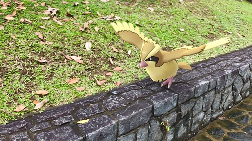 016 Pidgey (position=right)