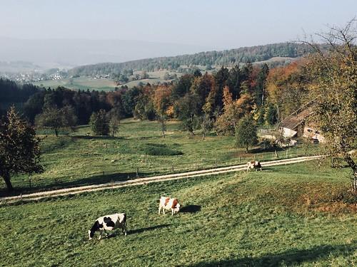 Moo land in Autumn