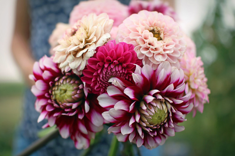 Day 230: Dahlia Bouquet