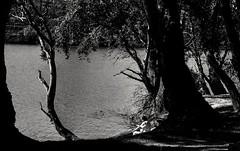 Natura/Landscape