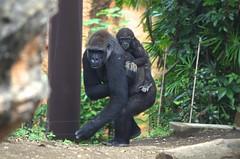 Ueno zoo, Tokyo, Japan