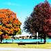 hall_park_trees