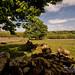 Emsworthy, Dartmoor National Park