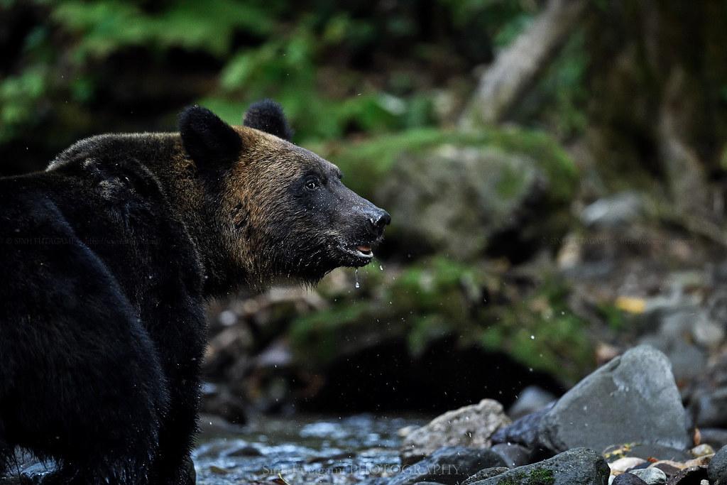 20181012-bear_DSC5574-1600-1600-1600