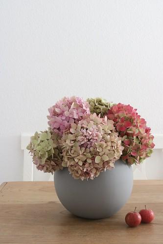 Herbstliche Hortensien