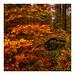 Im Wald by Werner D.