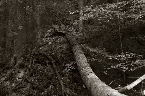 in the woods IX