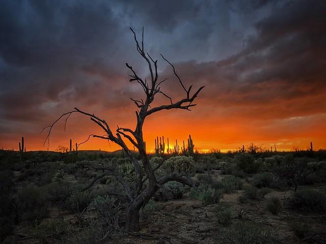 Horizon on fire, Sonoran Desert...